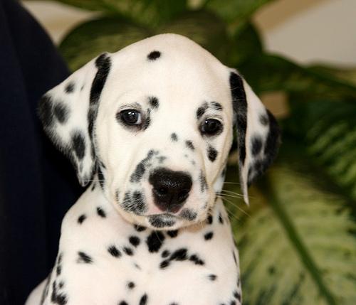 Puppies update!