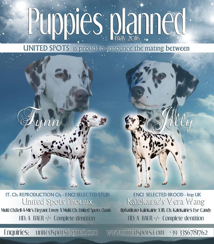 New puppies coming soon!