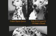 Cucciolata Y Queeny (United Spots Queen) e Bob (Take It Or Leave It Of Duke's Proud)