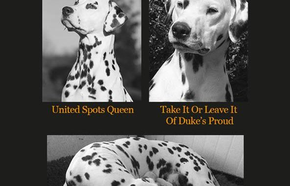 Cucciolata Y Queeny (United Spots Queen) e Bob (Take It Or Leave It Of Duke's Proud)
